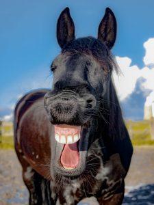 Ein Pferd das lacht