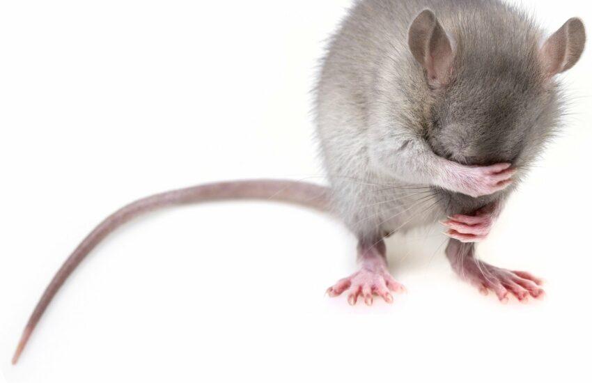 Mäusegulasch